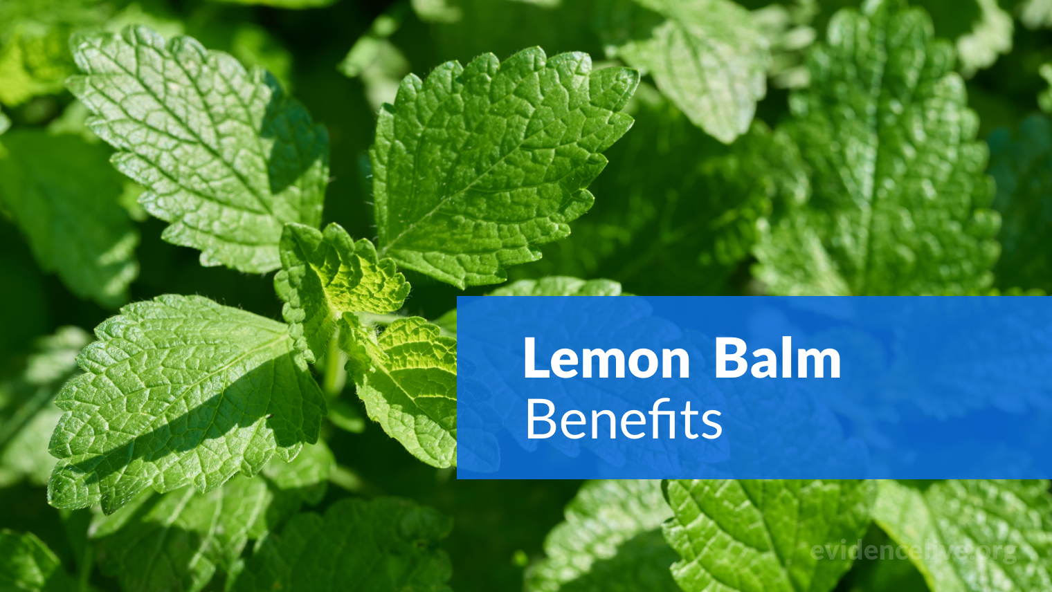 Lemon Balm Benefits: What It The Extract Used For?