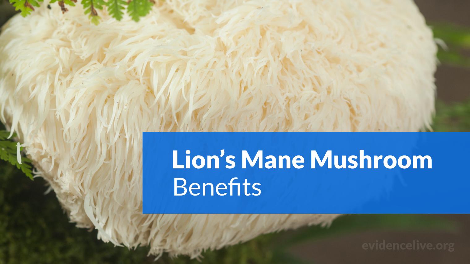 Lion's Mane Mushroom Benefits: Is It Good For Your Brain?
