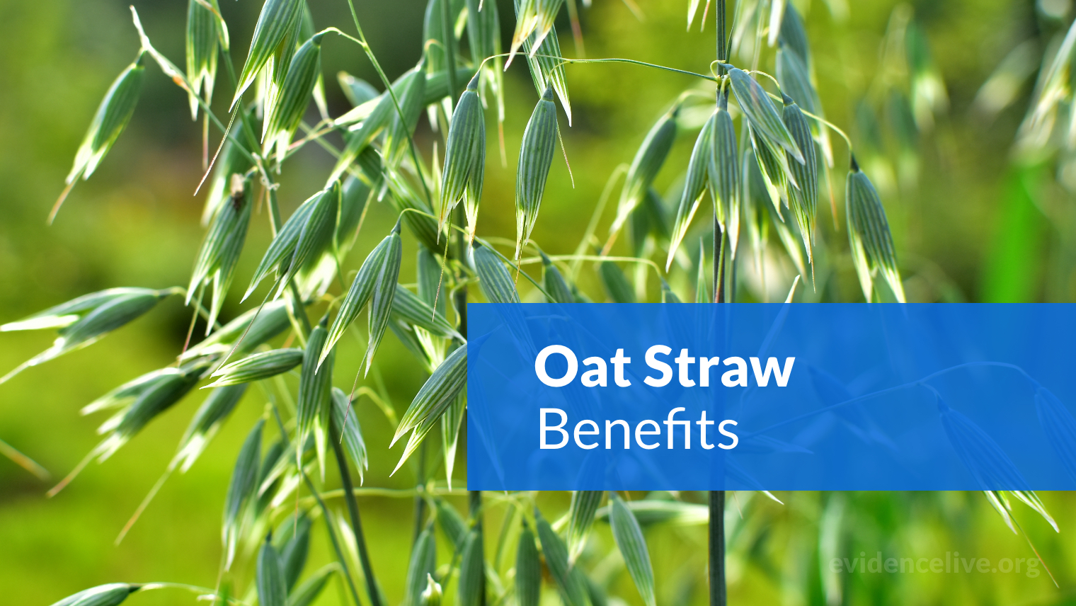 Oat Straw (Avena Sativa) Benefits: What Is The Extract Used For?