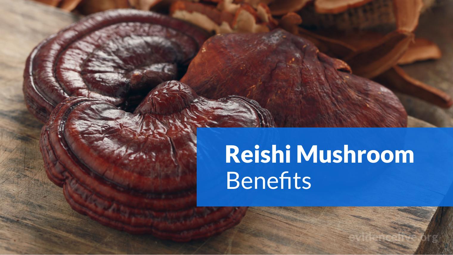 Reishi Mushroom Benefits: Is It Helpful Adaptogen For Brain?